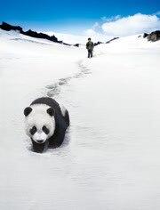 熊猫回家路