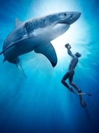 BBC:超越撕咬——鯊魚是如何拍攝的