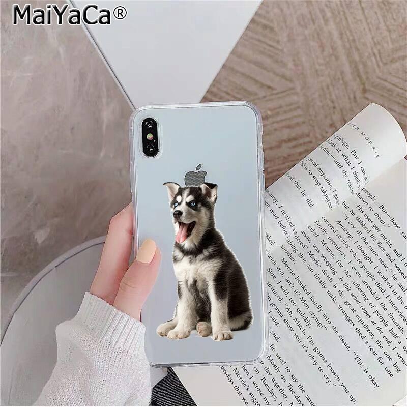 Animal Husky Dog Puppy