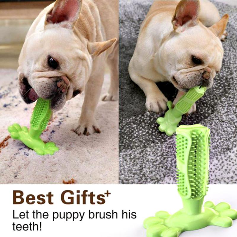 Jouet brosse à dent pour chiens