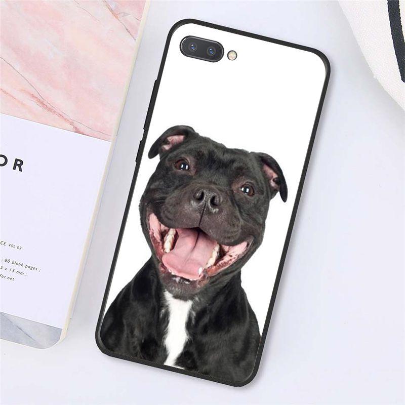 Pit Bull Lovely Pet Dog Pitbull