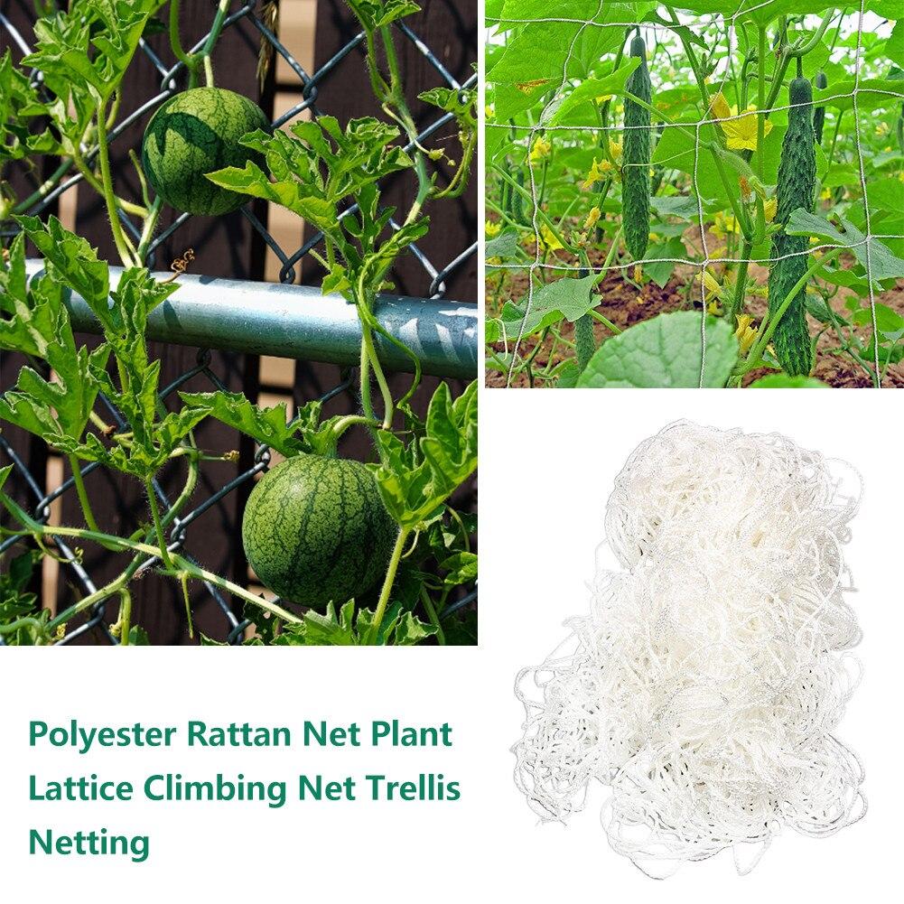 Vert Jardin Légumes Treillis Filet Soutien pour escalade Bean Plant vines NEUF