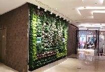 """【赣州植物墙】国大城市广场 种植袋式换成""""秀根""""模块化绿植墙【星巴克咖啡厅门口】"""