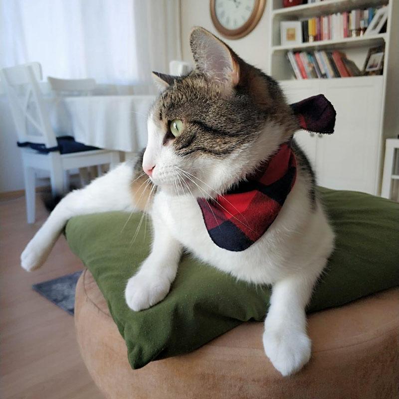 Bandana pour chat