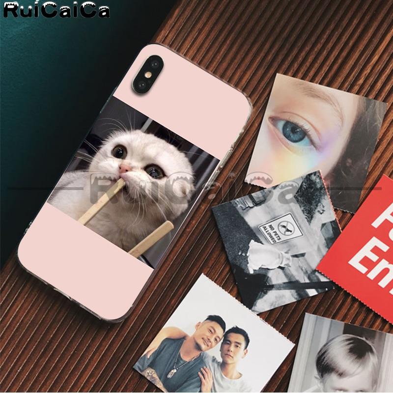 Cute animal cat dog art