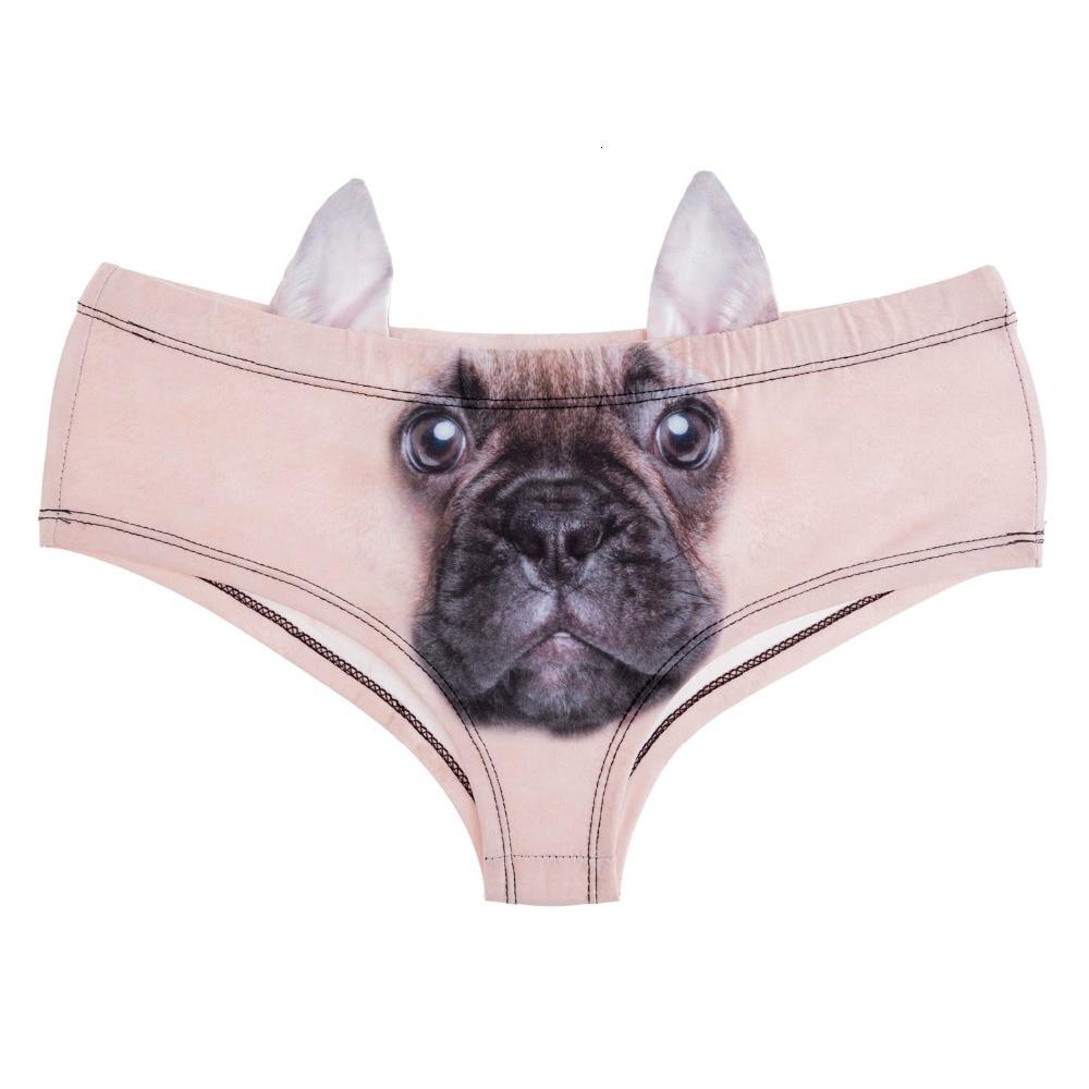 41069 french bulldog (3)