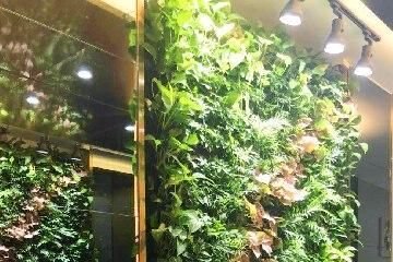 售楼部植物墙(广东惠州地产项目)
