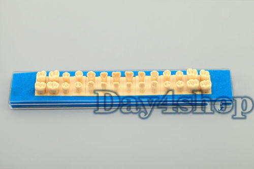 Permanent Teeth practice Model 1.2 Times with Abutments teach Anatomy model <br><br>Aliexpress