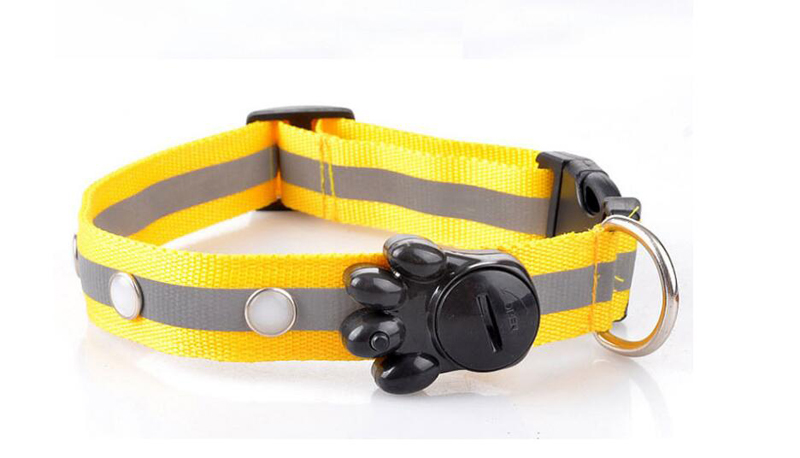 dog collar for small dogs (2)