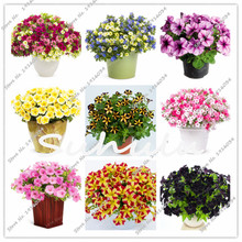 100 Pcs Petunia Hybrida Flower Seed Balcony Potted Trailing Petunia Flower Seeds Hanging Petunia Seeds For Home Garden Plant