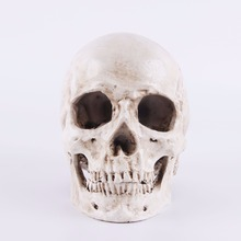 High simulation 1: 1 human skull resin craft cranium model personalized interior ornament Halloween decorations teaching aids(China)