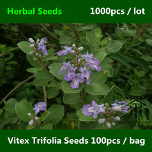 Professionally Labelled Vitex Trifolia Seeds 1000pcs, High Purity Simple Leaf Chaste Tree Seed, Prompt Shipment Man Jing Zi Seed(China)