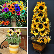 20Pcs French Bonsai Sunflower Seeds,Exotic Seed--Easy Growing and Beautiful, Make your Happier Garden Plant Flower Seeds(China)