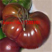 Sale!100 RED BUMBLE BEE TOMATO SEEDS! VERY RARE!Good tasty!Vegetable Seed