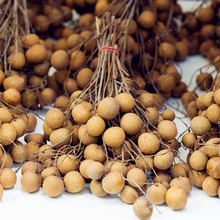 New Rare Dimocarpus Longan Seeds 5 Pcs/Pack Organic Fruit Dragon Eye Exotic Tropical Fruit Tree Seeds For DIY Home Garden Plants(China)