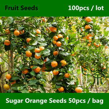 ^^Therapeutic Effect Sugar Orange Seeds 100pcs, Family Rutaceae Sweet Orange Seed, Famous Varieties China Sha Tang Ju Fruit Seed(China)