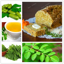 promotion perennial Moringa tree seed healthy plant food Healthy products rare tree plant bonsai seed for home garden 100pcs/bag(China)