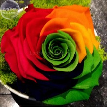 BELLFARM Crazy Rainbow Rose seeds, 50 Seeds, Professional Pack, big blooms a must for home garden E4190