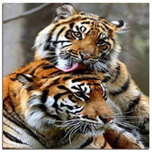 rhinestones diamond embroidery lovers tigers drill animals cross stitch kits crafts family brown decor in needlework domineering