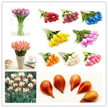 2pcsTrue Color Mixing Tulip Bulbs (Not Tulip Seeds),Tulips Variety Fresh Bulbous Root Flowers Planted flower bulbs good quality