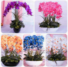 50pcs/bag Phalaenopsis Orchids Seeds Potted Flowers seeds Indoor Balcony Office Rare Orchid Seeds home garden plant pot