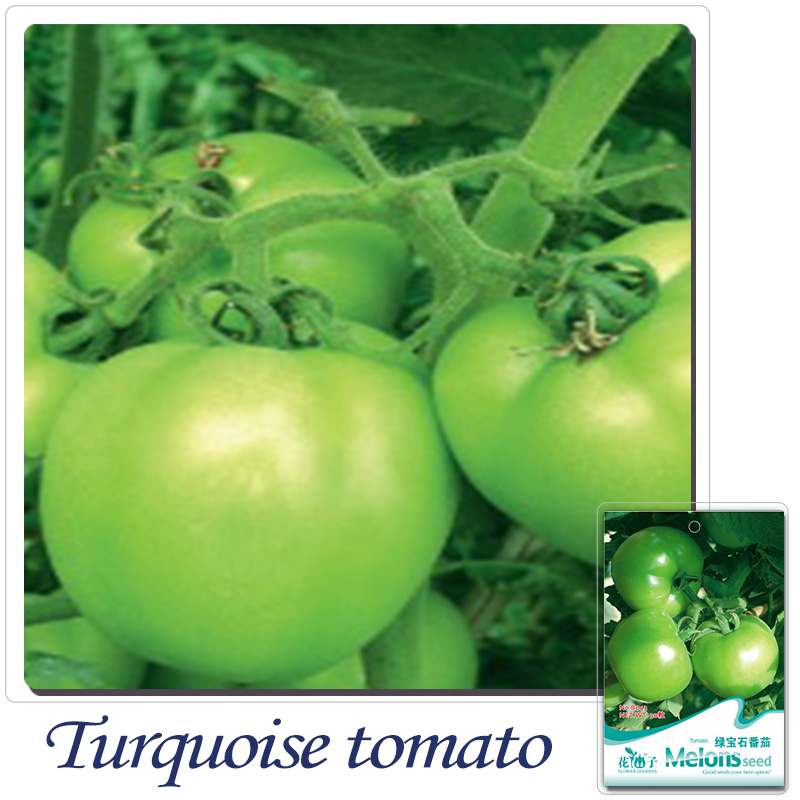 Если у помидора зеленые семена