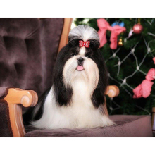"30*40CM NEW 5D DIY Diamond Embroidered Acupuncture Cross Stitch ""Long hair dog"" Diamond Art Wall Photo Christmas Decorative Gift"