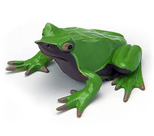 Original Japan genuine Animal Model Darwin poison toad Frog collectible Figurine Figure Toy Kids Gift