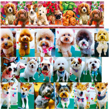 Pick color size 16 25 38 50 75 mm width dog Printed polyester Grosgrain Ribbon or Satin Ribbon DG02