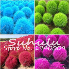 New Arrival !!! Colorful Grass Seeds Perennial Burning Bush Kochia Scoparia Seeds 100 pcs Ornamental Flower for Home & Garden(China)