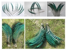 Freeshipping!200pcs/Lot SWORD PEACOCK FERN FEATHERS 10-12 Inches 25-30cm peacock feathers