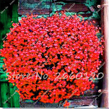 100 Seeds / Pack Rare Red Flax Seeds Organic Newly Harvested Flowers Seeds For Home&Garden Easy Grow Plant Seeds