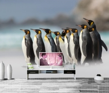 Penguins King Animals photo wallpaper,living room TV background sofa wall bedroom kitchen restaurant bar children 3d mural(China)