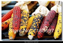 Free Shipping new 2014  100pcs seeds vegetables Rainbow Corn Seeds Edible Fruit Vegetable Seeds DIY Home Garden Plant