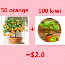 50 rare gold orange seeds send 100 Mini Kiwi seeds for gift bonsai fruit seeds for DIY home garden planting(China)