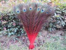 Manufacturers selling 50 PCS Red peacock feathers 22-24inches/55-60cm