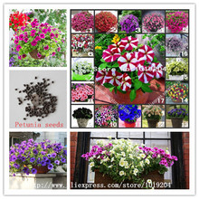 100 PC beautiful flower seeds, 30 varieties of bonsai petunia flower seeds, choose any flowers plant, free shipping(China)
