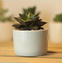 Creative simple white mini potted succulents small round table ceramic pots 5.5cmx5.5cmx4cm freeshipping