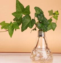Transparent Tabletop Glass Vase Bulb Shape Hydroponic Container Terrarium Plant Flower Pot Vase Home Office Decor