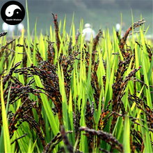 Buy Black Rice Seeds 300pcs Plant Grain Oryza Sativa For Food Paddy(China)