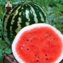 20pcs Water Melon Seeds Seedless Watermelon Seed Fresh * Cool Summer Fruit Variety Bonsai Plants For Home Garden As Kid Gift