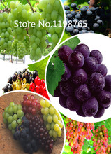 Special Price Promotion! 50 Grapes Seeds 10 kinds mixed packed, Fruit Seeds High Germination DIY Garden Perennial Blooming Plant(China)