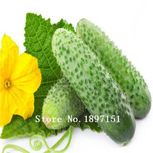 Big sale Hot Selling 100pcs White Cucumber Seeds DIY Home Garden Green Vegetable Seeds Free Shipping