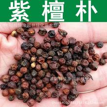tree seeds collected seeds of purple bomb purple bombs Park hackberry tree seed seed Rosewood simple filming 200g / Pack