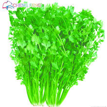 200pcs Coriander Seeds Cilantro Rich Aroma Good Cooking Herb Diy Garden Vegetable Seeds Good Taste Delicious Healthy Free Ship
