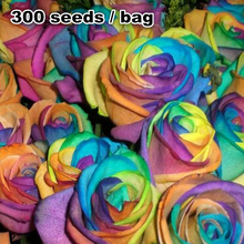 Free shipping  flower seeds imported from Holland, Beautiful rainbow rose seeds, Bonsai seeds easy to plant .300 / pack