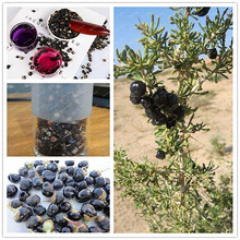 Hot Selling!!!Wild 200 seeds/bag black wolfberry, Chinese wolfberry healthy tea,natural dried fruit,anti-aging organic green(China)