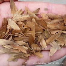 200gram Tree Seeds Freshly Collected Seed Big-leaf Ash Northeast Of Ash Seeds Canal Liu Real Shot