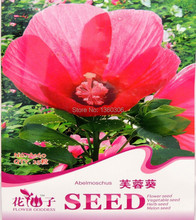 Flower Fairy Seeds - Hibiscus flowers sunflower seed color package 25