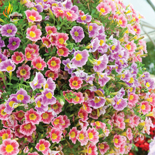 Heirloom Mixed Hanging Petunia Flower Seeds, Professional Pack, 100 Seeds, New Flowers Light up Your Garden TS029